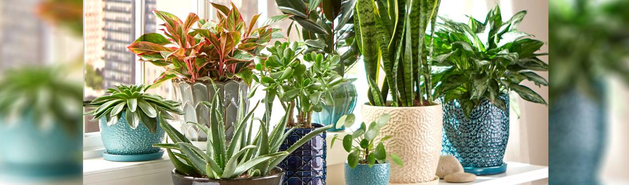وجود این ۵ گیاه در خانه سبب می شود که راحت بخوابید