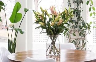 ۸ گیاه که انرژی مثبت در فضای خانه منتشر می کنند
