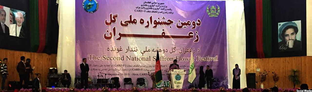 جشنواره ملی گل زعفران؛ زنان ۹۰درصد تولیدکنندهی زعفران افغانستان