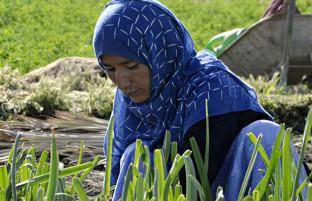 کار در مزرعه؛ شرح زندگی 4 زن کشاورز در حومه پایتخت افغانستان