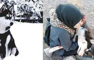 آسمان در هرات کشته شد، صهبا افغانستان را رها میکند؛ آیا حیوانات در افغانستان حقوقی دارند؟