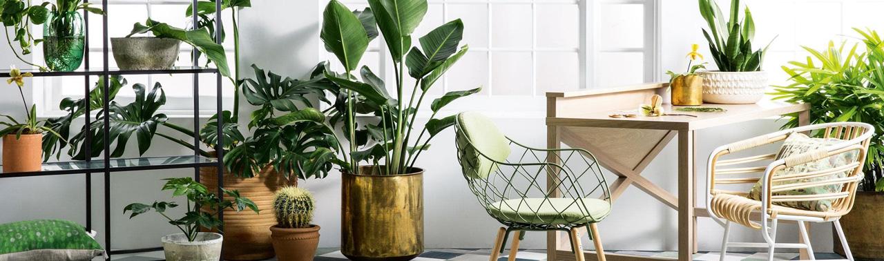 ۸ گیاه قدرتمند که هوای داخل خانه را تمیز می کنند