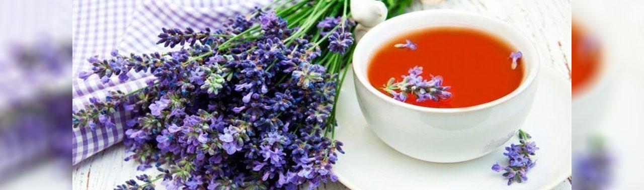 ۷ بهترین گیاه دارویی برای بهبود سلامت مغز