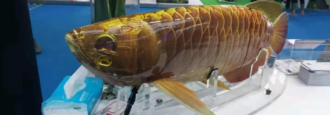 ارتش چین از یک دِرون زیرآبی به شکل یک ماهی واقعی رونمایی کرد